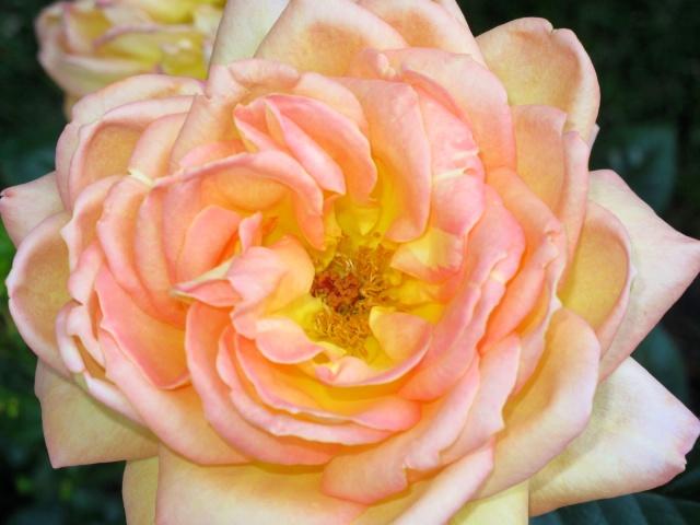 flower_upclose_blog_work_allthingsmajor